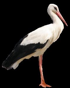 Byta elbolag vid flytt | Stork | Bytaelbolag.com
